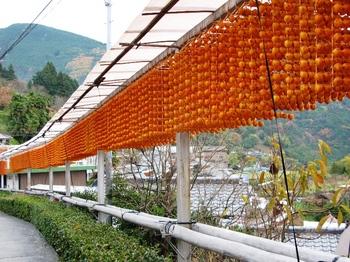 吊るし柿の里5.JPG