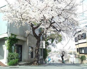 工房桜.jpg