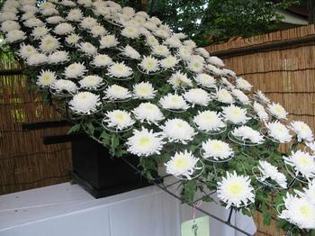 菊祭り2.JPG