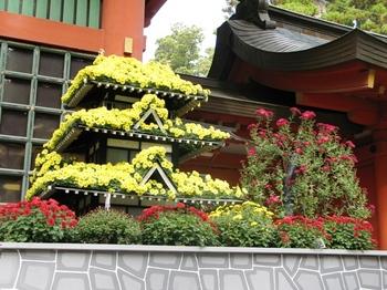菊祭り4.JPG