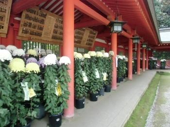 菊祭り1.JPG